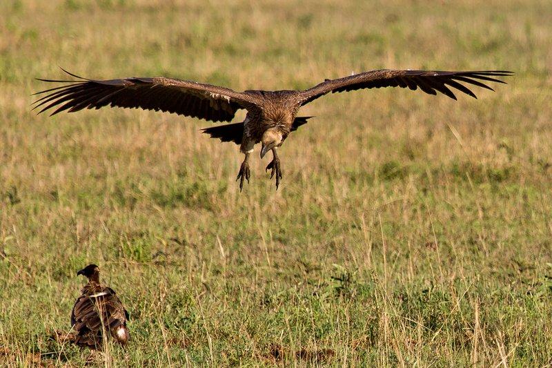 large_Vultures__..Backed_10-9.jpg