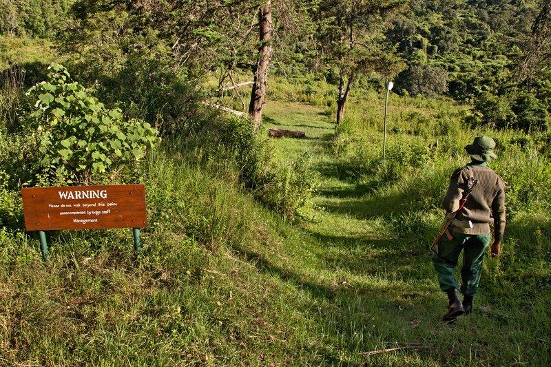 large_Walking_Safari_1.jpg