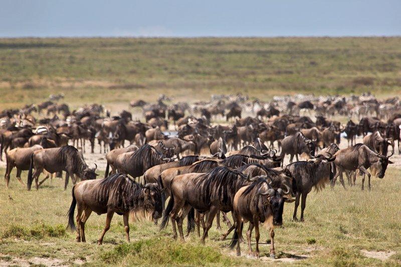 large_Wildebeest.._Valley_8-6.jpg
