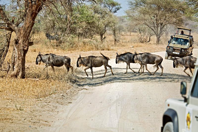 large_Wildebeest_1.jpg