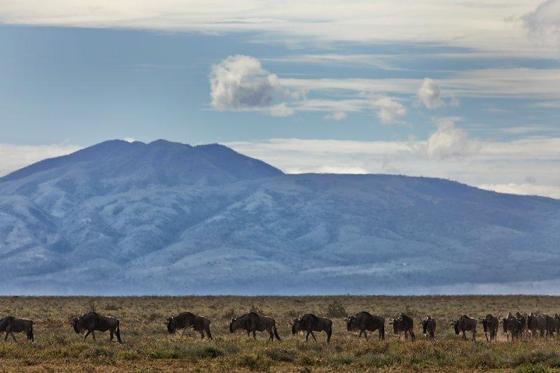 large_Wildebeest_Migration_2.jpg