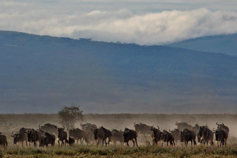 large_Wildebeest_Migration_3.jpg