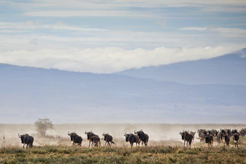 large_Wildebeest_Migration_4.jpg