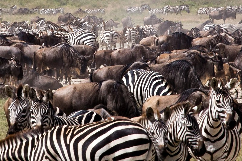 large_Zebra_and_..Valley_8-10.jpg