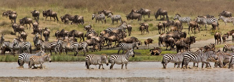 large_Zebra_and_..Valley_8-25.jpg