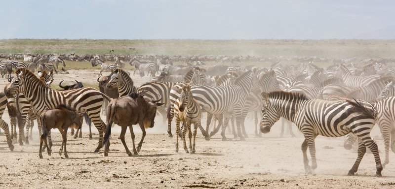 large_Zebra_and_..Valley_8-31.jpg
