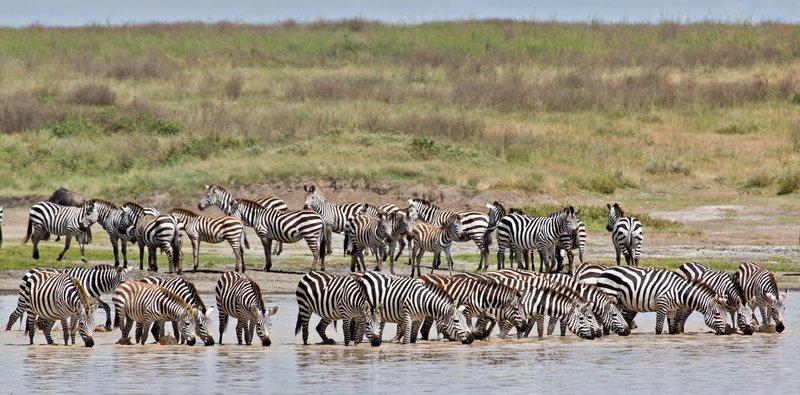 large_Zebra_at_H..Valley_8-37.jpg