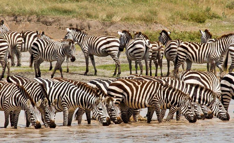 large_Zebra_at_H..Valley_8-39.jpg