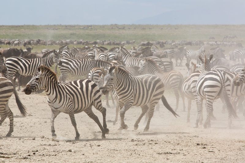 large_Zebra_at_H..Valley_8-51.jpg
