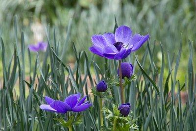 Purple_flowers-8796.jpg