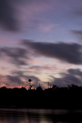 A silhouette of an osprey and its nest resting against a twilight sky