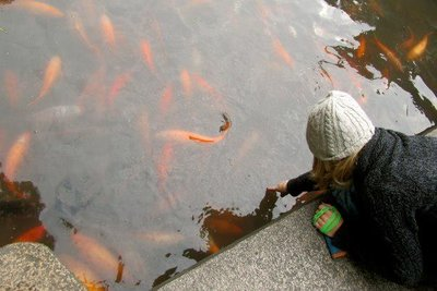 yu garden coy pond