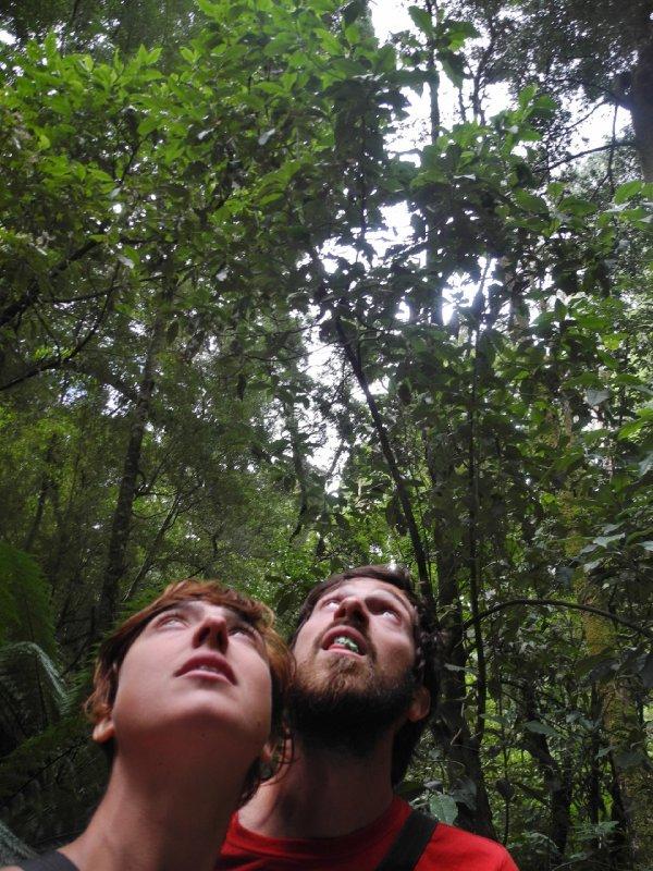 langs de Great Ocean Road krijg je ook de gelegenheid om een korte wandeling te maken door echt regenwoud, fijne afwisseling en afkoeling dachten wij!