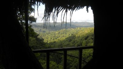 view from the tree house