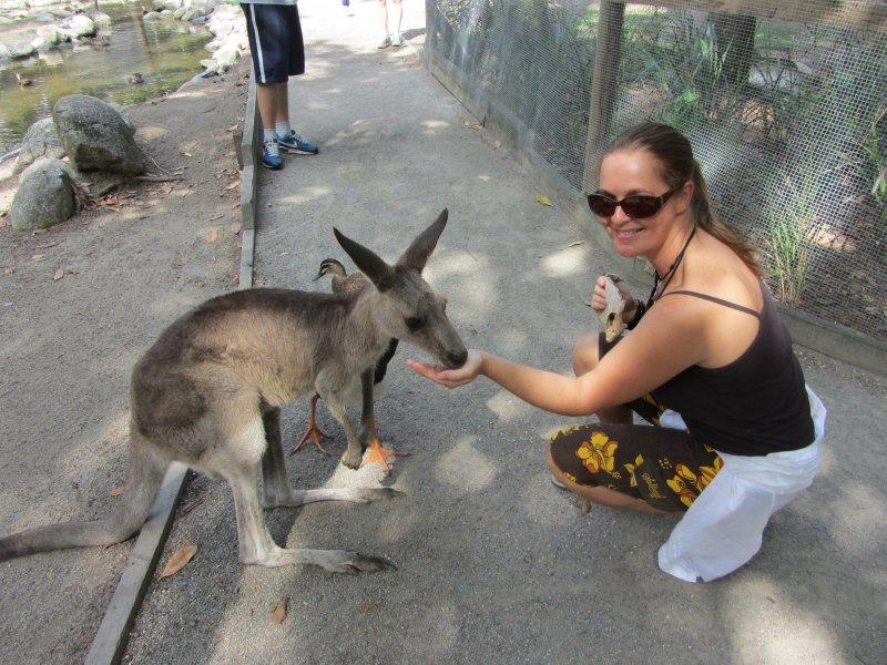 Feeding kangaroo