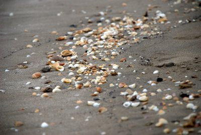 Shell Trail