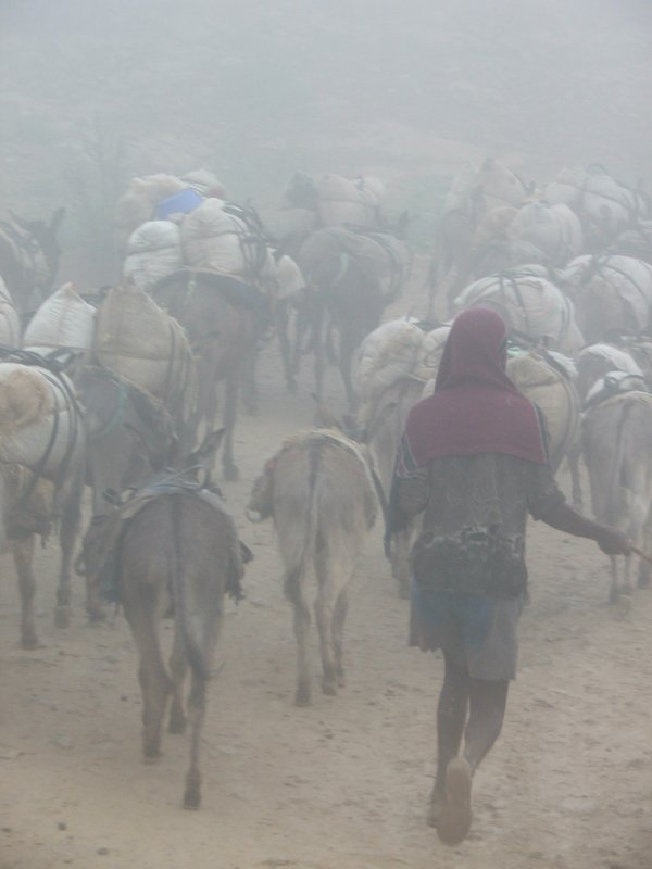 Donkeys in the mist