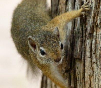 11. Bush Camp, Tsedilo, We love squirrel's