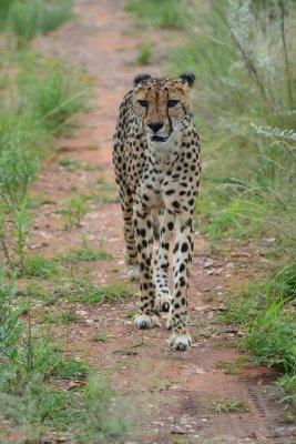 11. Chris D's photo, Cheetah Park 1