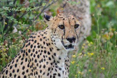 12. Chris D's Cheetah Park photo 2