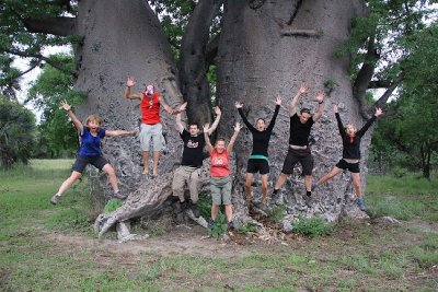 1. Largest Baobab Tree