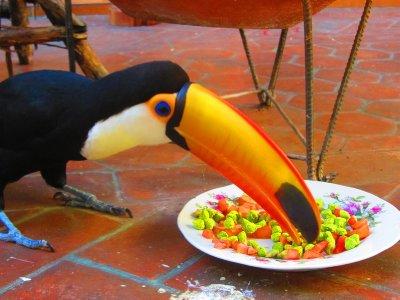 2. Even the Toucan eats his vegatables