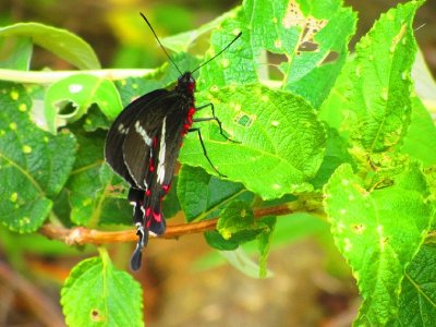 3. Pretty butterflies everywhere