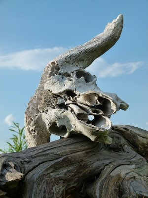 3. Skull left lying around