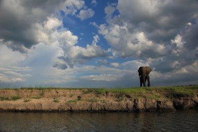 4. Elephant, Chobe National Park, Sam and Alex's photo