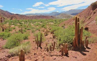 4. Gaint cactuses