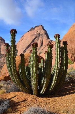 d. Chris P's photo. Wouldn't be the desert without a cactus plant