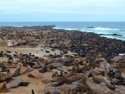 h. Seals everywhere