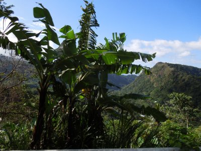 Dominica 089