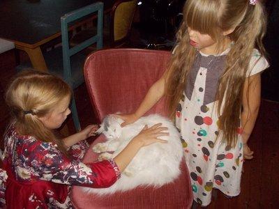 Kos - Alva - katten Vegas og Lilou