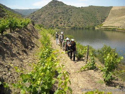 Douro Valley with David Monteiro - 1