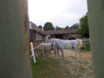 AU_Horses as an anti-stress business (Porrau)
