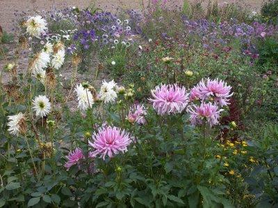 AU_Porrau - someone's flowers