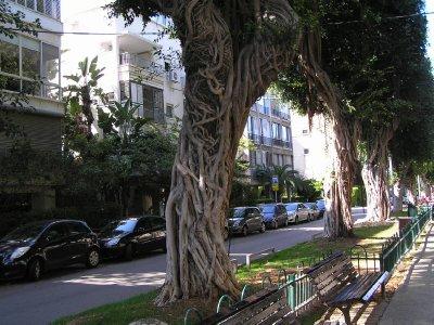 ISRAEL_Tel Aviv trees
