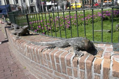 NL_Amsterdam lizards