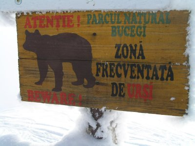 ROMANIA - attention, bears are here!
