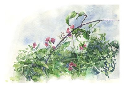 Sweet Pea watercolor
