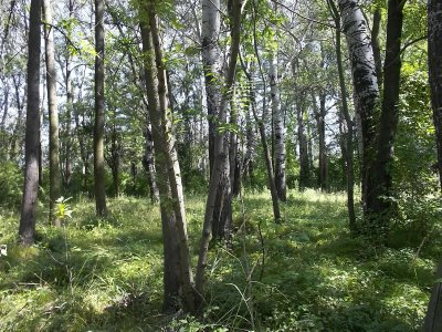 AUSTRIA_Lobau - Vienna's jungle (2)
