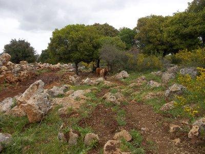 ISR_Upper Galilee