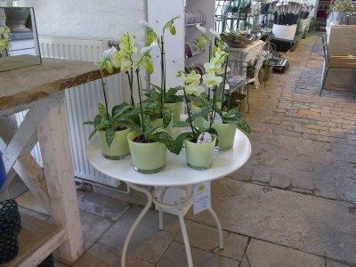 AU_Orchids in orangery in Laxenburg