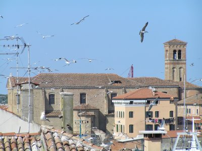 ITALY_Chioggia - gulls