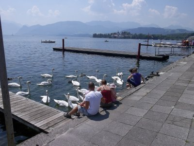 AU_feeding swans (Gmunden)