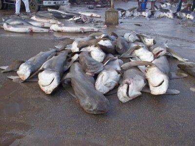 Sri Lanka_Negombo Fish Market