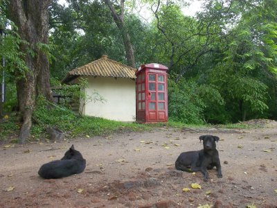 Sri Lanka_dogs and telephone.