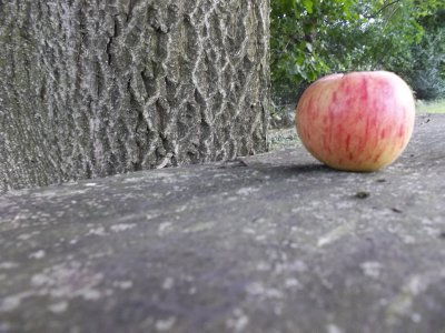 apple__3_.jpg