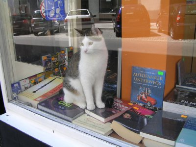 cat_in_bookstore_01.jpg